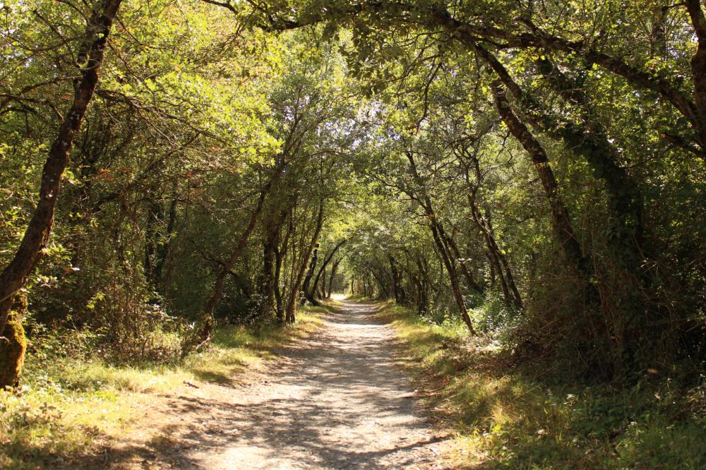 Anillo Verde De Vitoria Gasteiz Parque De Armentia Al Filo De Lo Improbable