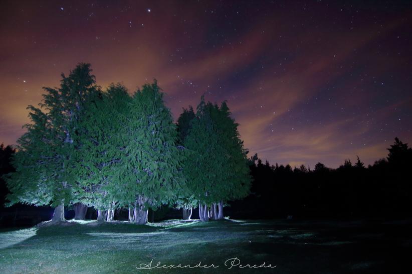 Nocturnas en Entzia